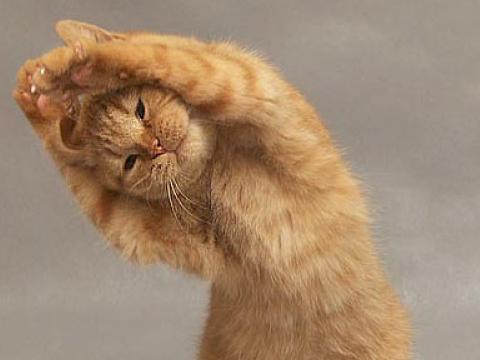 cat exercising